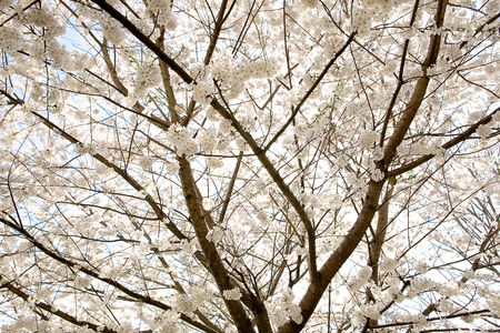 Springweb2010-0147